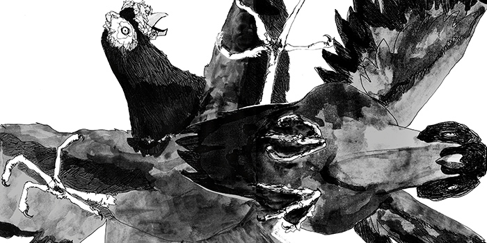 pigeon on the rooftop_ final (original)-99